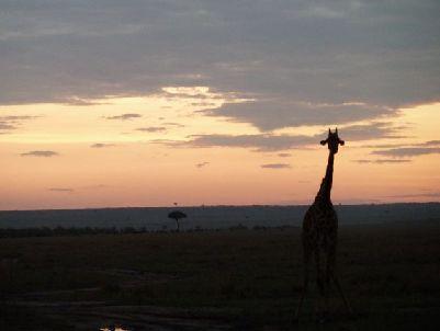 machen giraffen geräusche